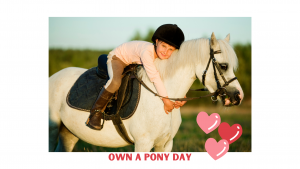 Own a Pony Day @ Barguse Riding Centre